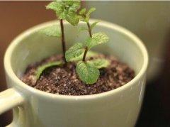 盆栽奶茶的做法视频