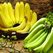 【香蕉什么时候吃治便秘】香蕉怎么吃能治便秘_吃哪种香蕉能治便秘