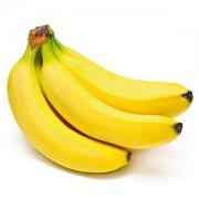 【香蕉和芭蕉哪个好】香蕉和芭蕉的区别_香蕉和芭蕉的功效