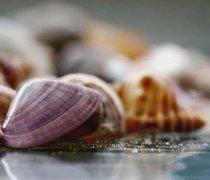 【河蚌怎么吃】河蚌的营养价值_河蚌的做法大全